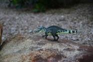 Acrocanthosaurs waits