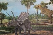 Styrachosaurus (Alberosaurus stalks)