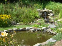 Frog pond with goldfish and waterfall
