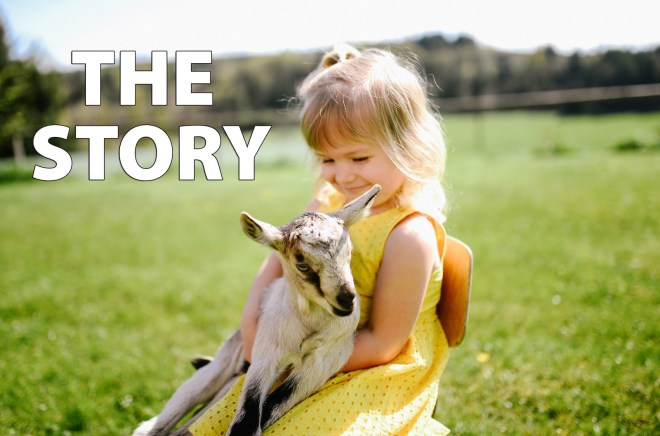 the story of the homemade goat milk infant formula recipe