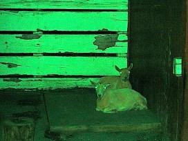 green zoo at night 3