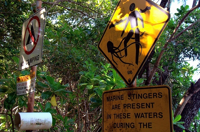 Jellyfish warning sign on a Queensland beach.