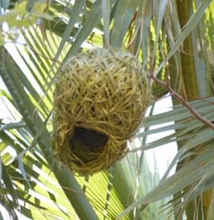 nests wb joy