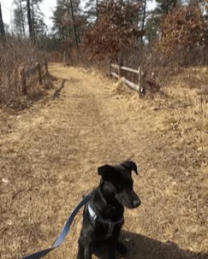 Dog enjoying the Madison Ave Barrens