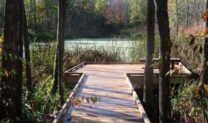 Nature in Greene County