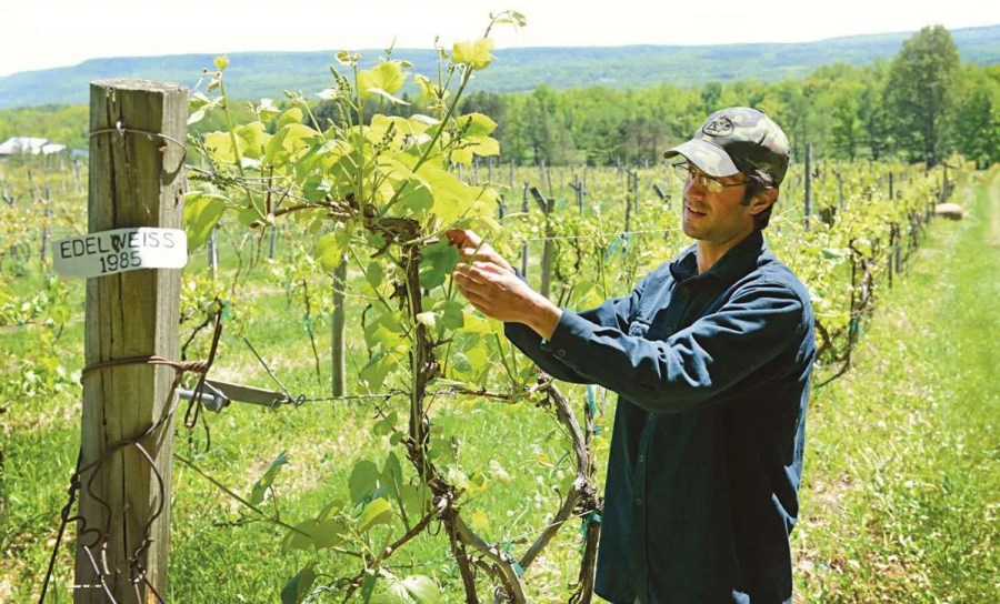 Altamont Winery Owner Mike DeCrescenzo (photo courtesy Edible Capital District)