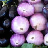 aubergine3