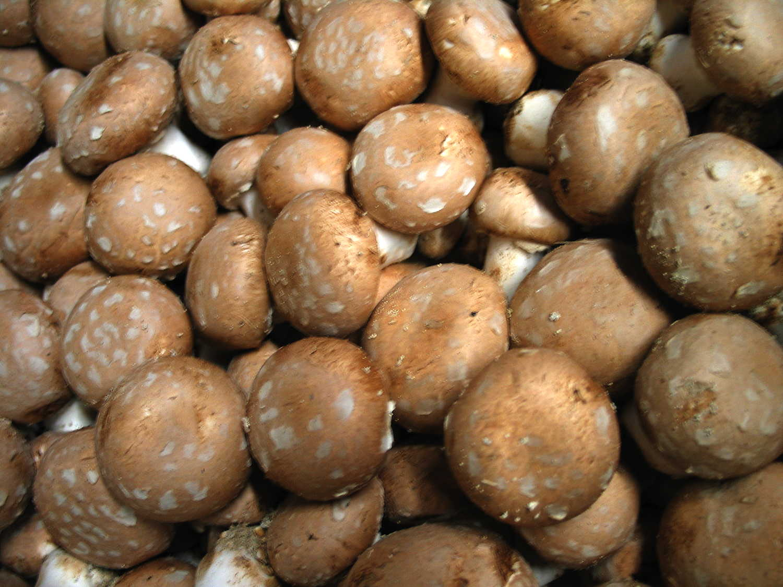 champignons4854