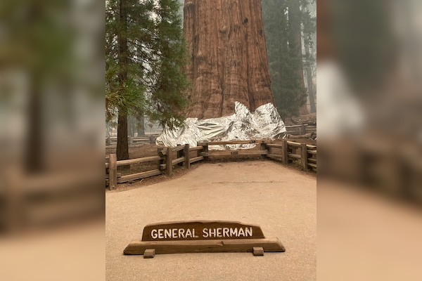 US Firefighters Optimistic About Saving World's Biggest Tree