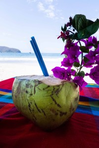 Get Your Fresh Young Coconuts Here!