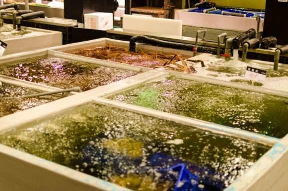 An Abundance of Fresh Seafood