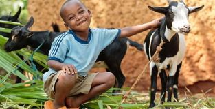 Heifer.org Goat and Boy