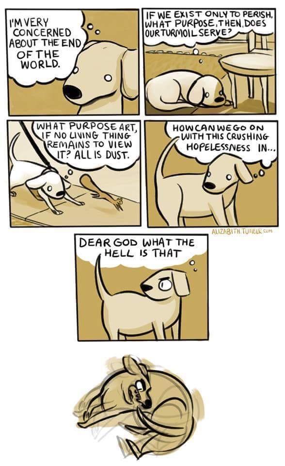 Dog chasing tail.jpg