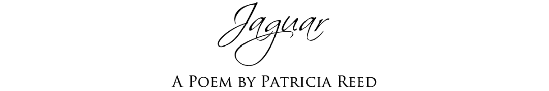 Jaguar a Poem by Patricia Reed