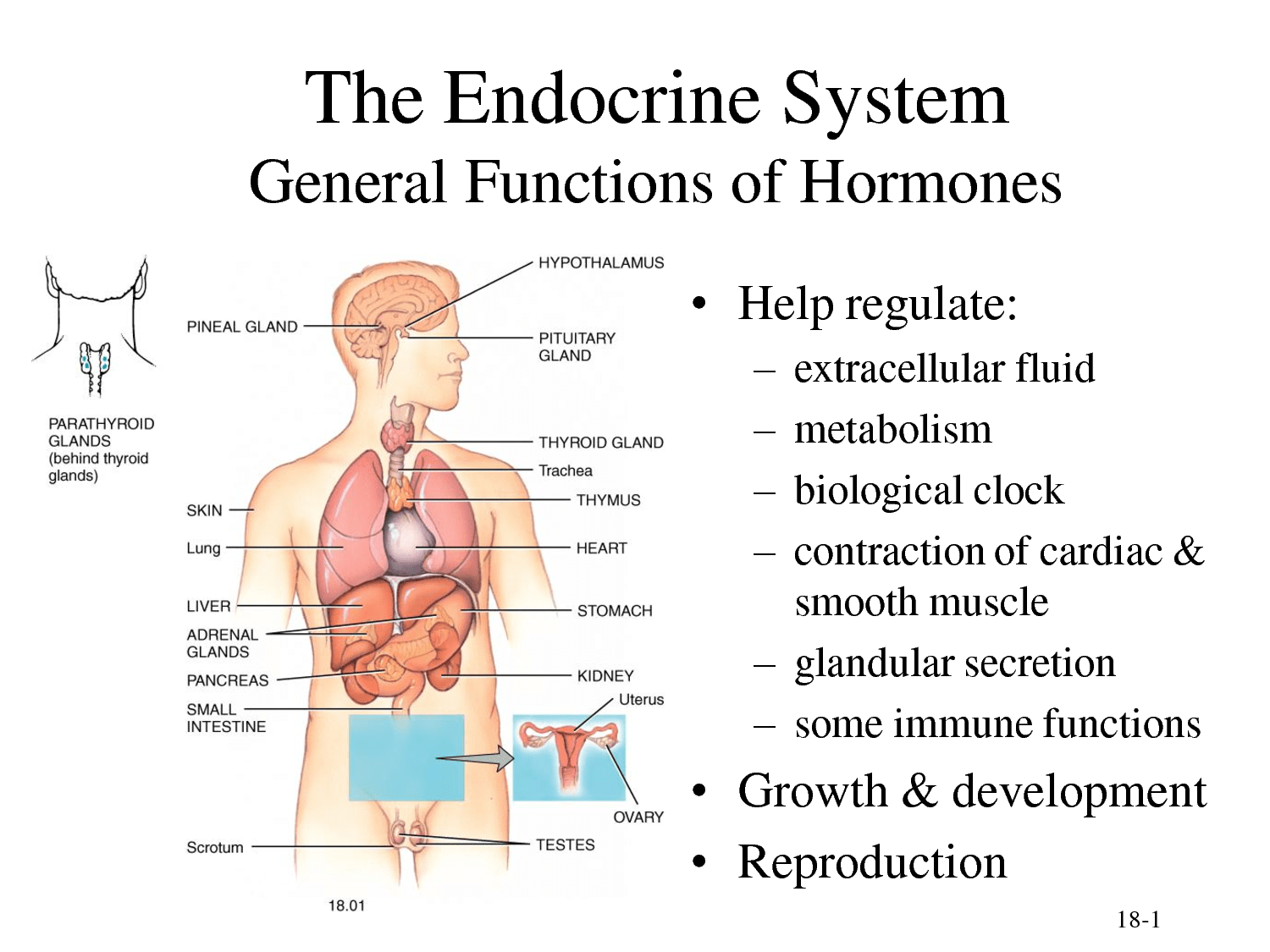 What You Need To Know About Hormone Imbalance