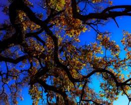 cali-skies-smaller