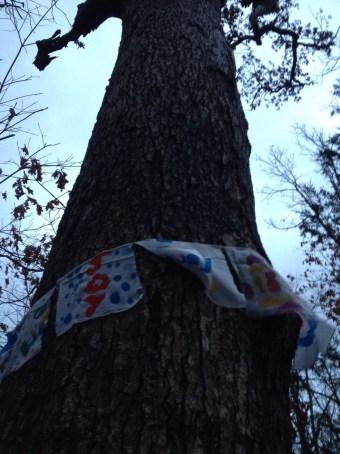 Flags on the oak.