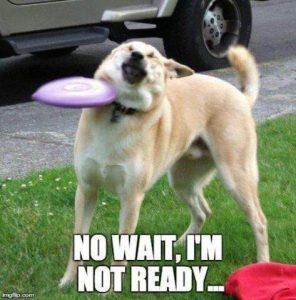 sjove billeder hund dum