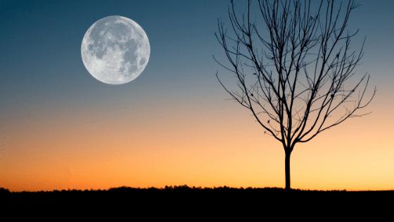 Volle maan bevermaan