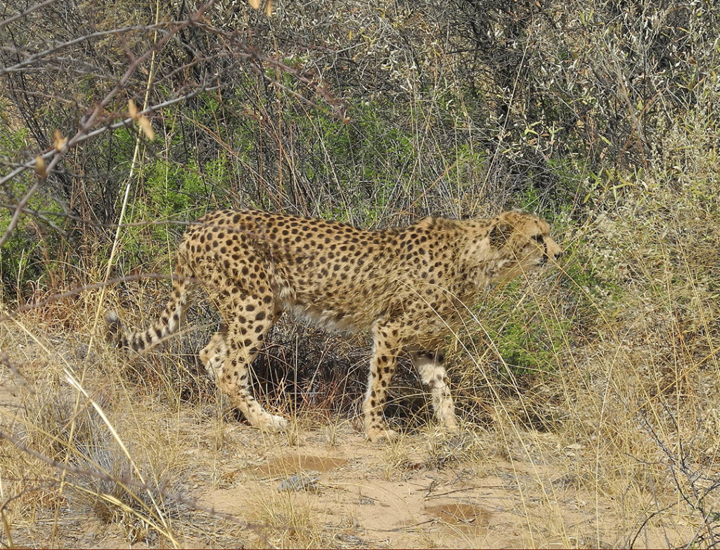 cheetahSlider