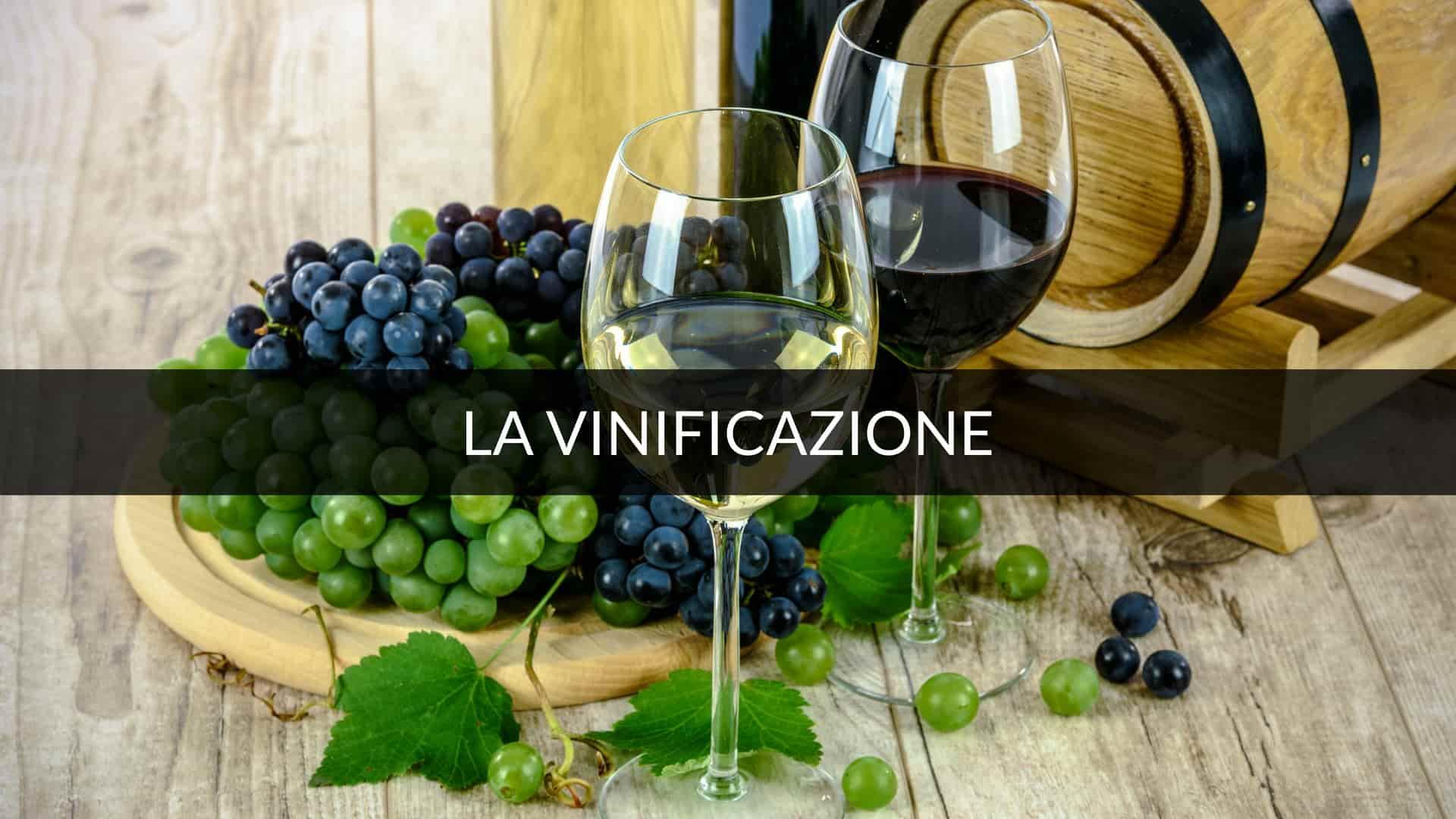 vinificazione in bianco , vino biancom mosto