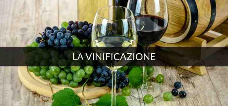 La vinificazione in bianco, il mosto, per un buon vino bianco
