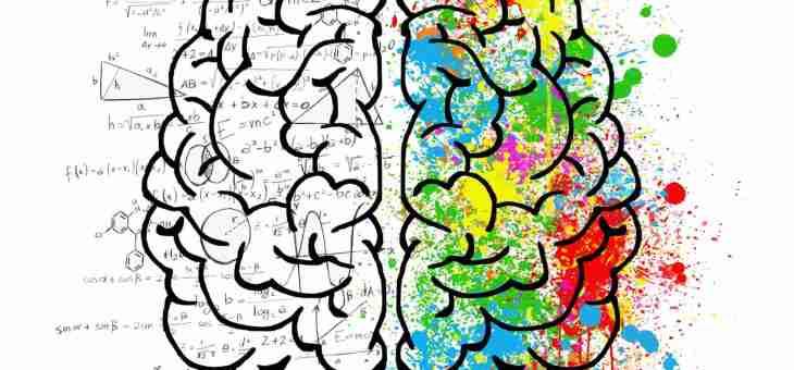 I recettori sensoriali, il midollo spinale e il talamo