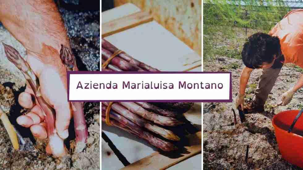 asparago violetto