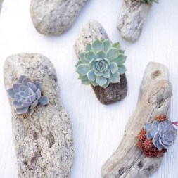 Ideas to arrange your succulent with driftwood 02