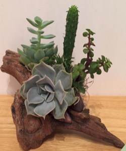 Ideas to arrange your succulent with driftwood 10