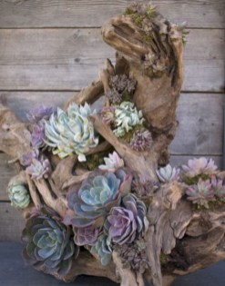 Ideas to arrange your succulent with driftwood 11
