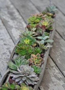Ideas to arrange your succulent with driftwood 12