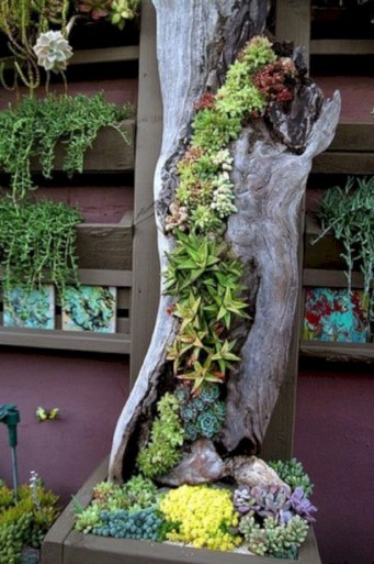 Ideas to arrange your succulent with driftwood 20