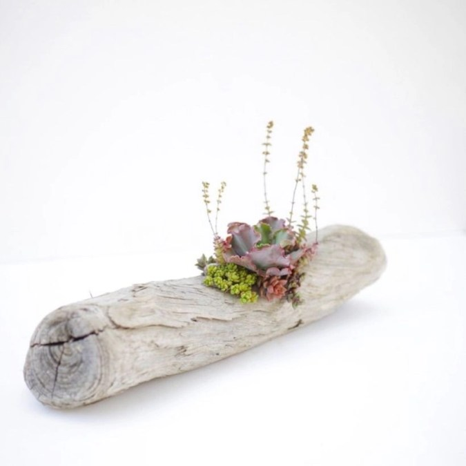 Ideas to arrange your succulent with driftwood 30