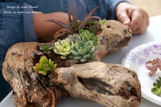 Ideas to arrange your succulent with driftwood 32