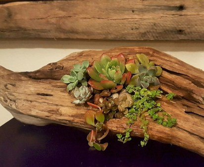 Ideas to arrange your succulent with driftwood 35