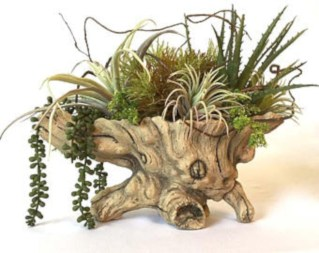 Ideas to arrange your succulent with driftwood 37