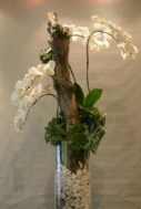 Ideas to arrange your succulent with driftwood 41