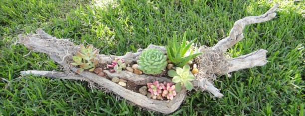 Ideas to arrange your succulent with driftwood 43