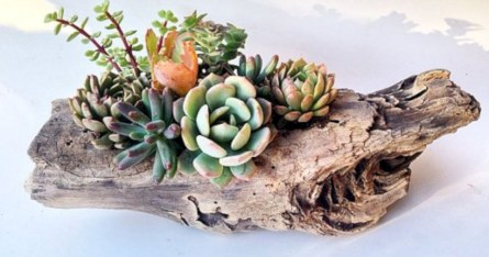 Ideas to arrange your succulent with driftwood 44