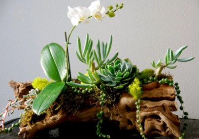Ideas to arrange your succulent with driftwood 47