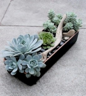 Ideas to arrange your succulent with driftwood 48
