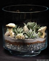 Amazing ways to planting terrarium 04