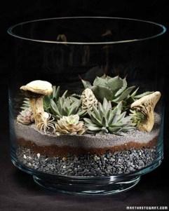Amazing ways to planting terrarium 04