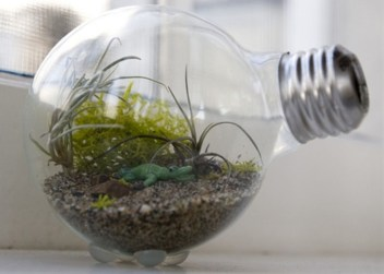 Amazing ways to planting terrarium 19