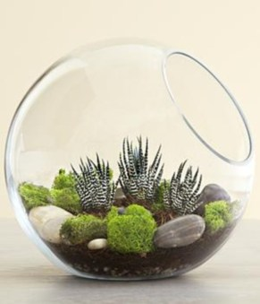 Amazing ways to planting terrarium 30