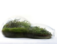 Amazing ways to planting terrarium 31
