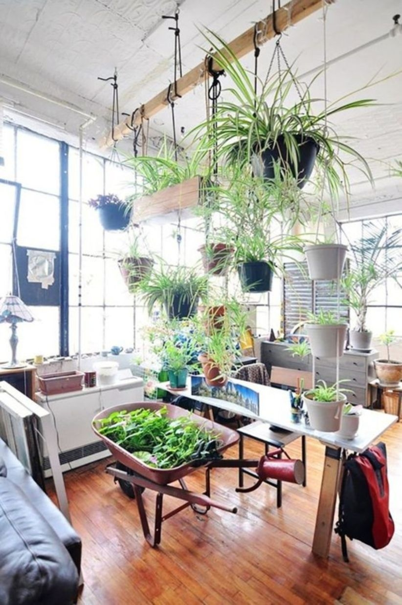 Beautiful oversized hanging plants for indoor style