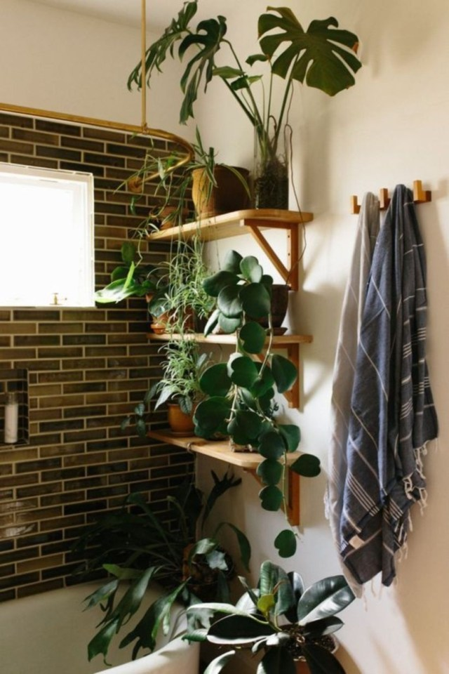 Best indoor plants for bathroom ideas