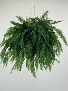 Best indoor plants you can grow without care 10